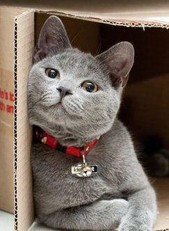 Bilder Katzen Lustig - Bilder Katzen Lustig