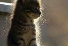 Bilder Katzenbabys 220x150 - Bilder Katzenbabys