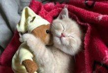 Bilder Kleine Katzen 220x150 - Bilder Kleine Katzen