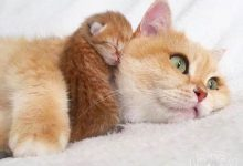 Bilder Mit Katze 220x150 - Bilder Mit Katze