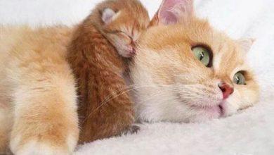 Bilder Mit Katze 390x220 - Bilder Mit Katze