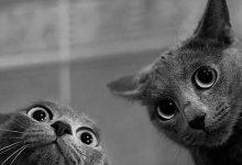 Bilder Mit Katzen 220x150 - Bilder Mit Katzen