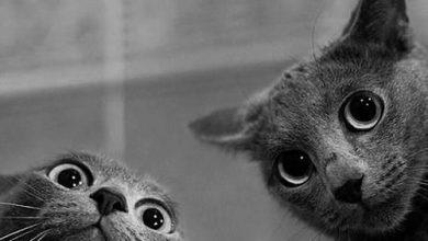 Bilder Mit Katzen 390x220 - Bilder Mit Katzen