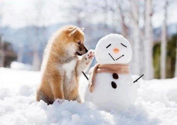 Bilder Mit Nikolaus - Bilder Mit Nikolaus