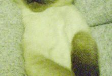 Bilder Süß 220x150 - Bilder Süß