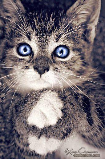 Bilder Susse Tiere Bilder Und Spruche Fur Whatsapp Und Facebook