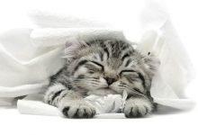 Bilder Von Babykatzen 220x150 - Bilder Von Babykatzen