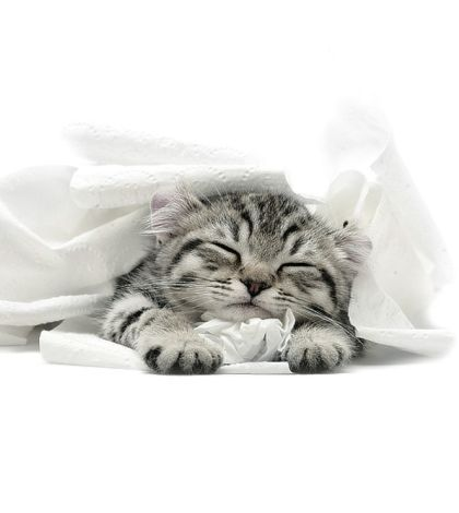Bilder Von Babykatzen - Bilder Von Babykatzen