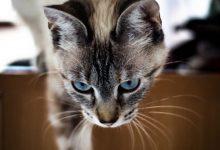Bilder Von Einer Katze 220x150 - Bilder Von Einer Katze