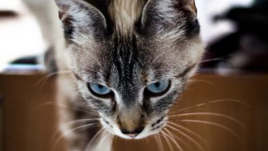Bilder Von Einer Katze 390x220 - Bilder Von Einer Katze