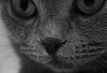 Bilder Von Hauskatzen Bilder Kostenlos 220x150 - Bilder Von Hauskatzen Bilder Kostenlos