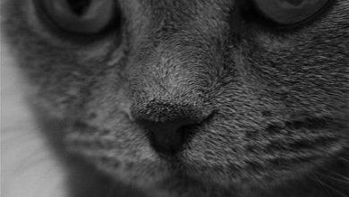 Bilder Von Hauskatzen Bilder Kostenlos 390x220 - Bilder Von Hauskatzen Bilder Kostenlos