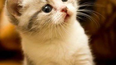 Bilder Von Katzen Baby 390x220 - Bilder Von Katzen Baby