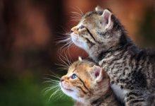 Bilder Von Katzen Kostenlos 220x150 - Bilder Von Katzen Kostenlos