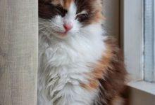 Bilder Von Katzen Zum Ausdrucken 220x150 - Bilder Von Katzen Zum Ausdrucken