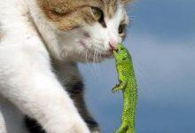 Bilder Von Katzen Zum Ausmalen 220x150 - Bilder Von Katzen Zum Ausmalen