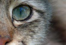 Bilder Von Katzenbabys 220x150 - Bilder Von Katzenbabys