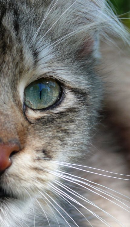Bilder Von Katzenbabys - Bilder Von Katzenbabys