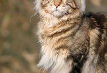 Bilder Von Kleinen Katzen 220x150 - Bilder Von Kleinen Katzen