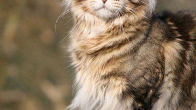 Bilder Von Kleinen Katzen 390x220 - Bilder Von Kleinen Katzen