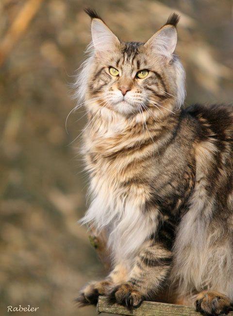 Bilder Von Kleinen Katzen - Bilder Von Kleinen Katzen