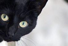 Bilder Von Lustigen Katzen 220x150 - Bilder Von Lustigen Katzen