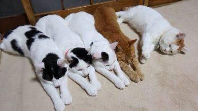 Bilder Von Lustigen Katzen Bilder Kostenlos 390x220 - Bilder Von Lustigen Katzen Bilder Kostenlos