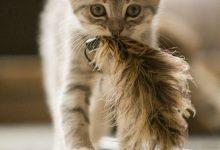 Bilder Von Süßen Katzen 220x150 - Bilder Von Süßen Katzen