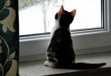 Bilder Von Süßen Katzenbabys 220x150 - Bilder Von Süßen Katzenbabys