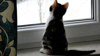 Bilder Von Süßen Katzenbabys 390x220 - Bilder Von Süßen Katzenbabys
