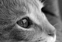 Bilder Von Wildkatzen 220x150 - Bilder Von Wildkatzen