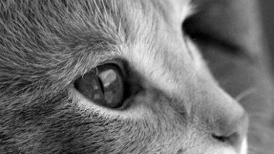 Bilder Von Wildkatzen 390x220 - Bilder Von Wildkatzen