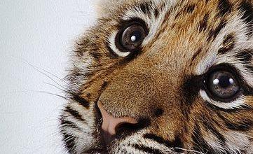 Bildersuche Katzen 361x220 - Bildersuche Katzen