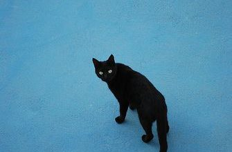 Blöde Katzenbilder Bilder Kostenlos 335x220 - Blöde Katzenbilder Bilder Kostenlos