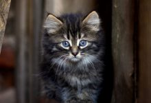 Black Cat Pictures Bilder 220x150 - Black Cat Pictures Bilder