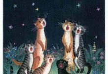 Britisch Kurzhaar Katzen Bilder 220x150 - Britisch Kurzhaar Katzen Bilder