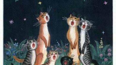 Britisch Kurzhaar Katzen Bilder 390x220 - Britisch Kurzhaar Katzen Bilder