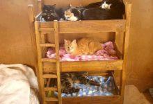 British Kurzhaar Katze Bilder Kostenlos 220x150 - British Kurzhaar Katze Bilder Kostenlos