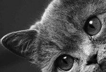Bunte Katzen Bilder Bilder Kostenlos 220x150 - Bunte Katzen Bilder Bilder Kostenlos