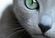 C For Cat Images Bilder 220x150 - C For Cat Images Bilder