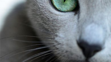 C For Cat Images Bilder 390x220 - C For Cat Images Bilder