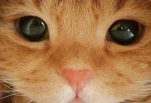 Cat And Dog Funny Images Bilder 220x150 - Cat And Dog Funny Images Bilder