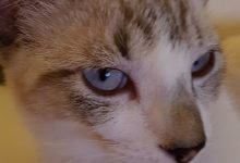Cat Animal Images Bilder 220x150 - Cat Animal Images Bilder