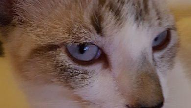 Cat Animal Images Bilder 390x220 - Cat Animal Images Bilder