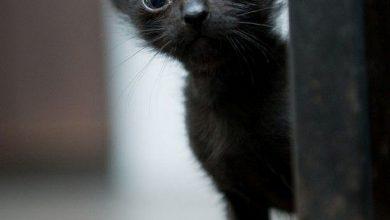 Cat Animal Pictures Bilder 390x220 - Cat Animal Pictures Bilder
