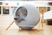 Cat Baby Pic Bilder 220x150 - Cat Baby Pic Bilder