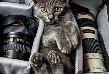 Cat Breeds With Pictures Bilder 220x150 - Cat Breeds With Pictures Bilder