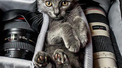 Cat Breeds With Pictures Bilder 390x220 - Cat Breeds With Pictures Bilder