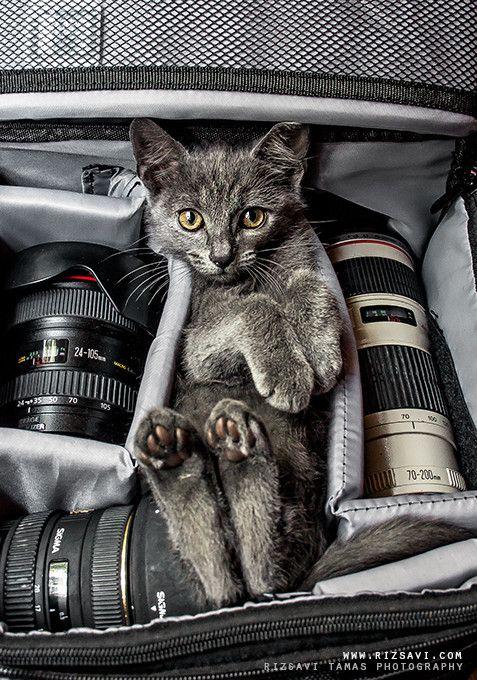 Cat Breeds With Pictures Bilder - Cat Breeds With Pictures Bilder