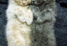 Cat Cat Pictures Bilder 220x150 - Cat Cat Pictures Bilder